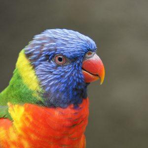 parrot-1604777_1920