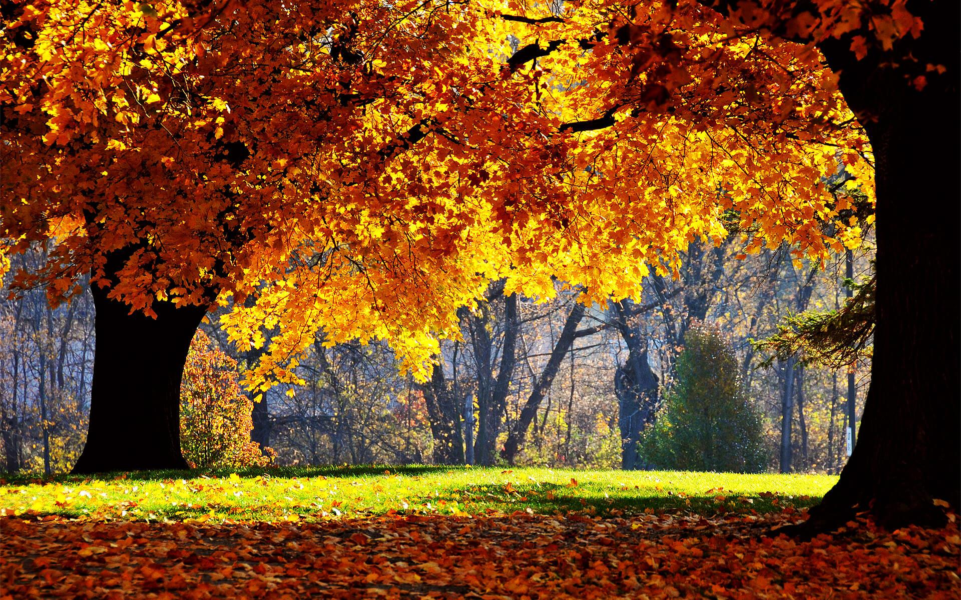 autumn landscapes inspiro
